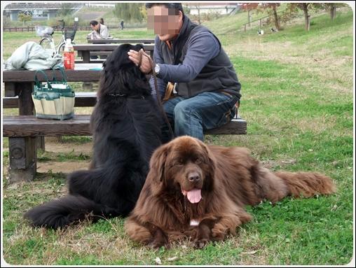 2011_1127dogrun0015.jpg
