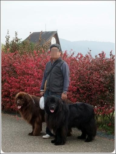 2011_1127dogrun0021.jpg