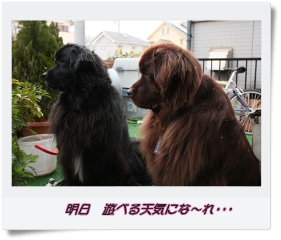 2012_0208yuki0005.jpg