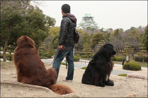 2012_0308oosakajo-ume0014.jpg