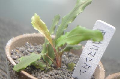 繝槭ャ繧キ繝・蟷エ雉