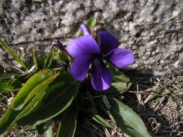 FloralColors28.jpg