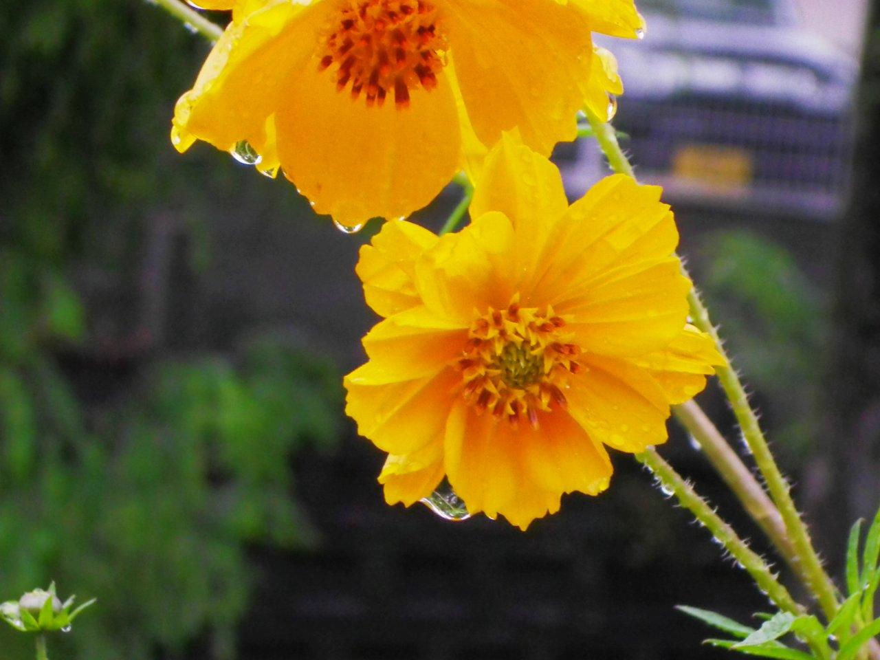 RainyTime129.jpg