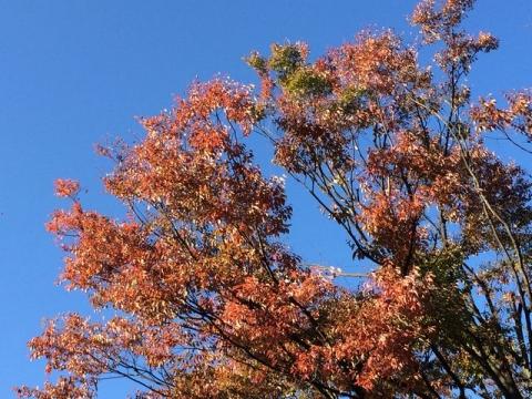 2014-10-25 紅葉