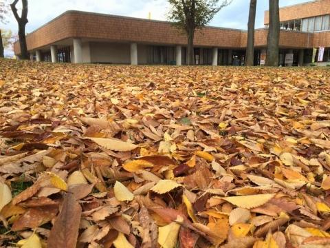 2014-11-10 文化ホール