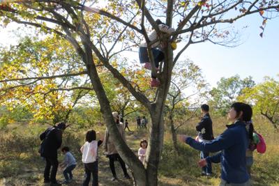 木登り_4662