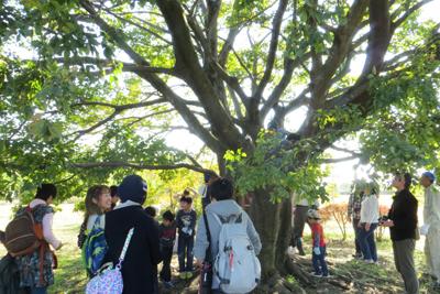 木登り_4664