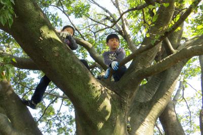木登り_4668