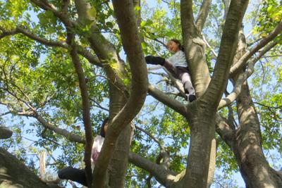 木登り_4681