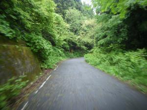 新緑トンネル