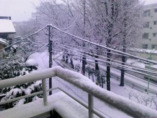 初雪20130114-01