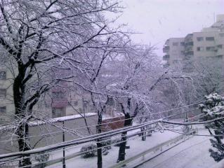 初雪20130114-02