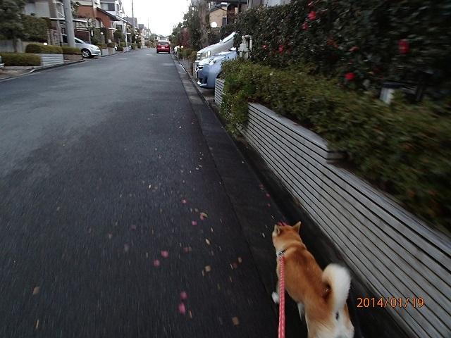 P1190312ku-chann.jpg