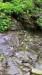 栗又の滝へ 滝巡り3-1