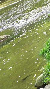 栗又の滝へ 滝巡り 4-1