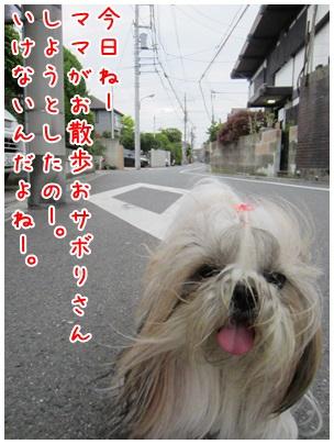 2013-04-19-01.jpg