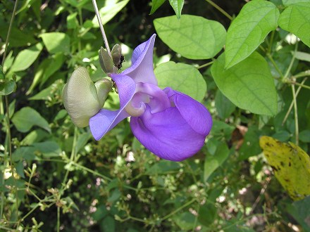 2008 GUATEMALA (86)