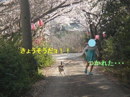 お花見3.