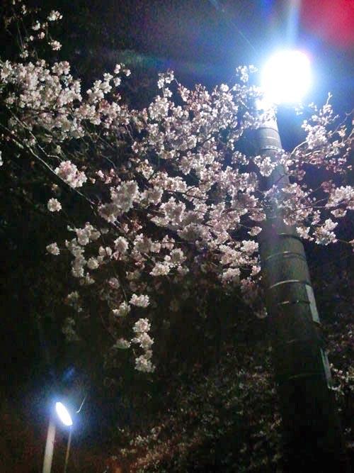 5日の夜桜