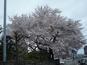 春でーす6