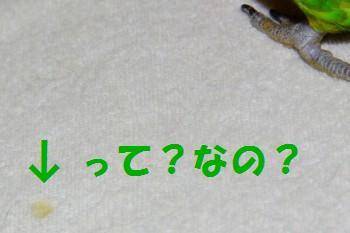 コピー ~ IMG_9801