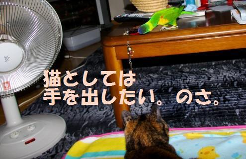 コピー ~ IMG_0541