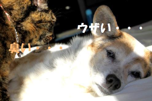 コピー ~ IMG_2811