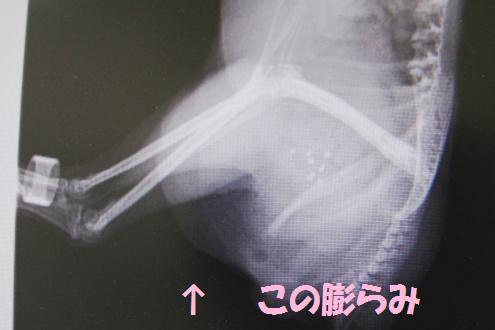 コピー ~ DSC05698