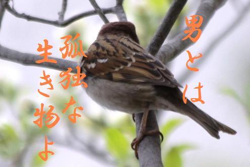 コピー ~ コピー ~ IMG_6247