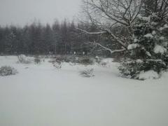 どさっと雪