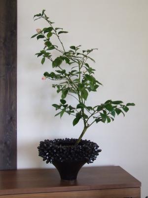 つばき 鉢植え