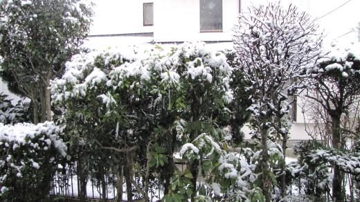 2010-02-18・朝の積雪・1