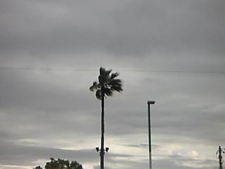 善通寺椰子横強風