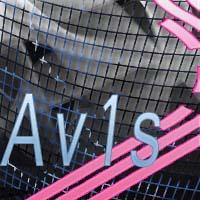 Av1s.jpg