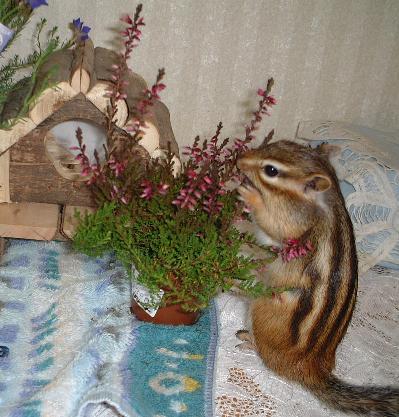 花とログハウス