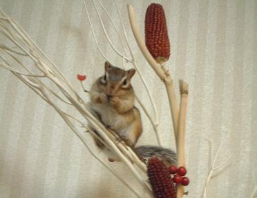 木の上で春を待ちますぅ~