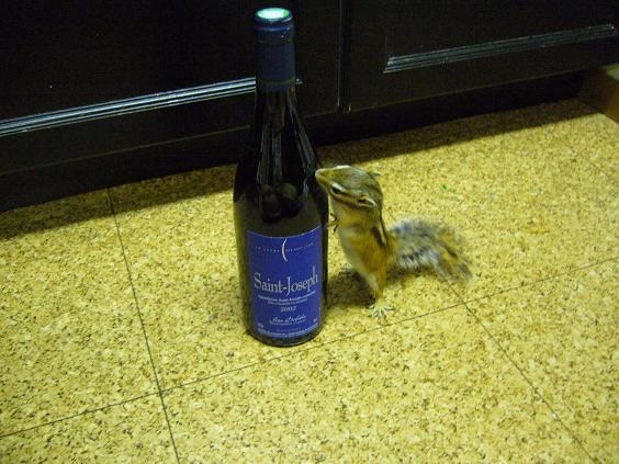 どれどれ~♪リヨンのワインですかぁ~?