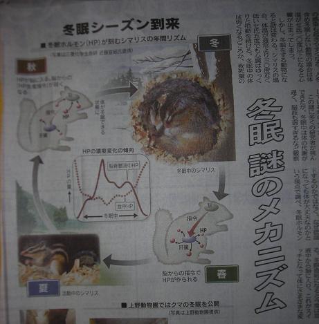 新聞記事(冬眠)
