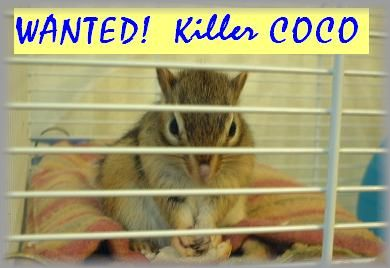 Killer_Coco