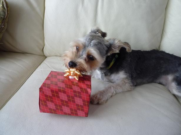 ホウホウ,これがプレゼント?