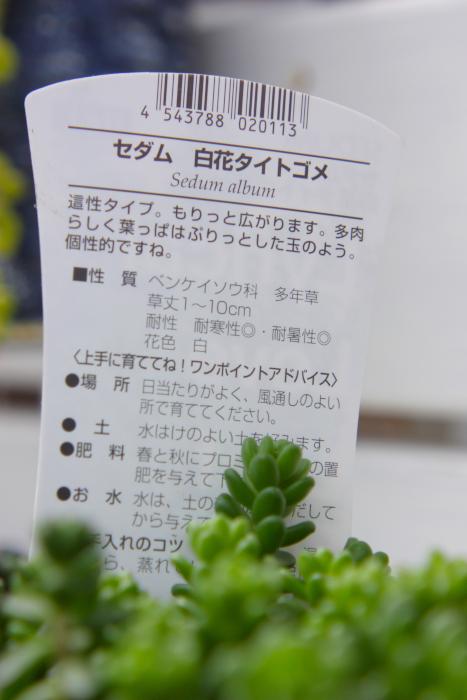 20130331タイトゴメ2[1]