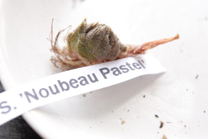 20130604 Noubeau Pastel[1]