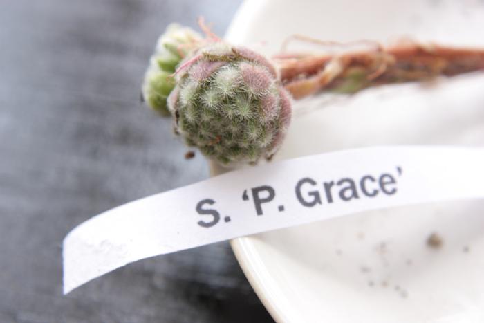 20130604 P Grace[1]