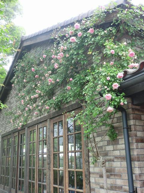 201100626軽井沢1 006