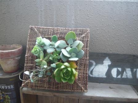 2011.7-8多肉植物の壁掛けp1