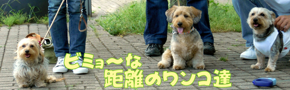 2_20100509213533.jpg