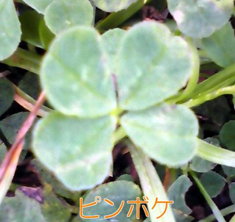 3_20100507004706.jpg