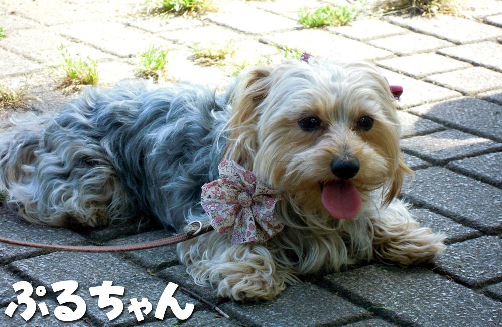 5_20100509213532.jpg