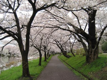 高田公園2