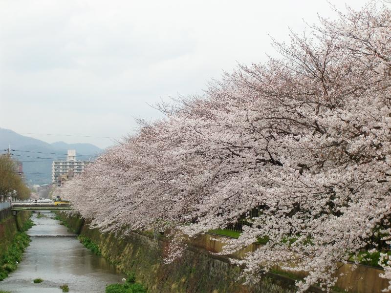 桜2010-1